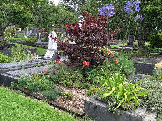 "Te Henui Cemetery: January - cercis ""forest pansy"", dahlias and agapanthas"