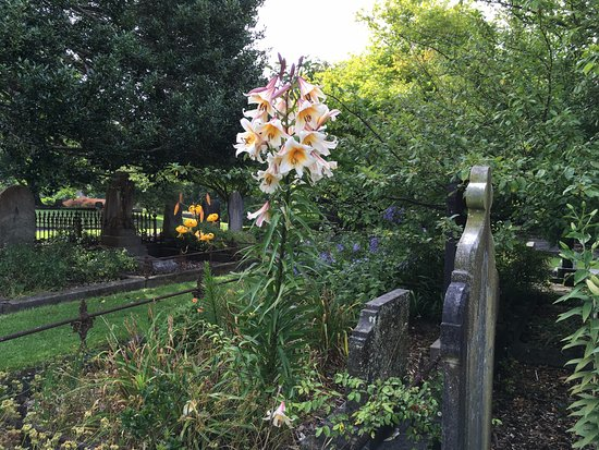 New Plymouth, Neuseeland: January - lilies