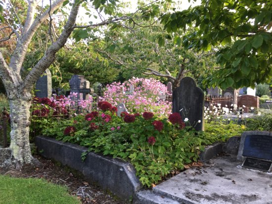 Te Henui Cemetery: late March - hydrangeas & japanese anemone