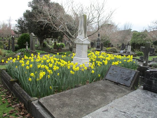 New Plymouth, New Zealand: late August - daffodils