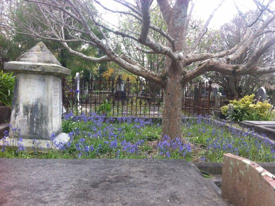 New Plymouth, New Zealand: early October - bluebells