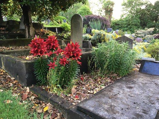 New Plymouth, Nueva Zelanda: late November - asiatic lilies