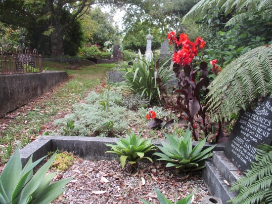 New Plymouth, New Zealand: Febraury - cannas & succulents