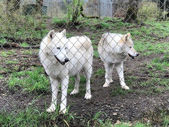 Wolf Haven International: photo0.jpg