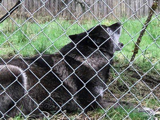 Wolf Haven International: photo1.jpg
