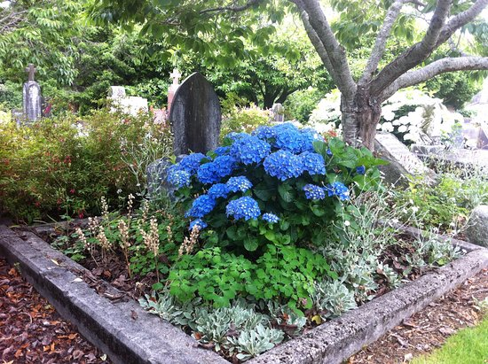 New Plymouth, New Zealand: December - hydrangea & lychnis