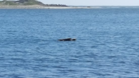 Lil Hut : Sea Otter with her kit in Morrow Bay Harbor