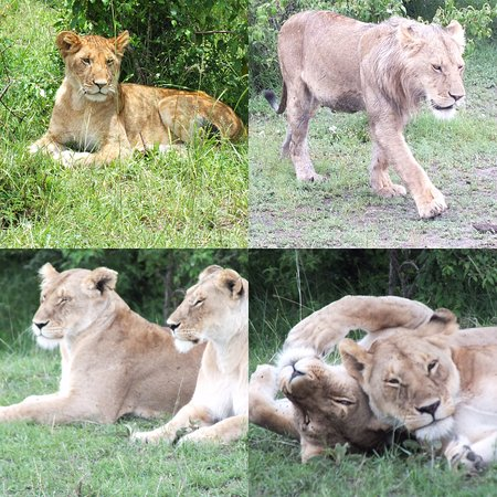 Lion Trails Safaris - Day Tours: photo0.jpg