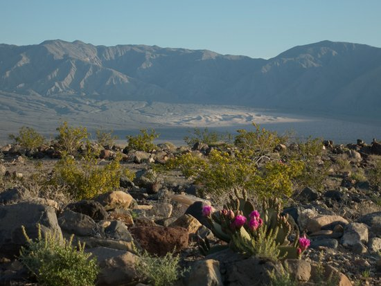 Panamint Springs Resort: morning light just north of the campground, Panamint Dunes in the background