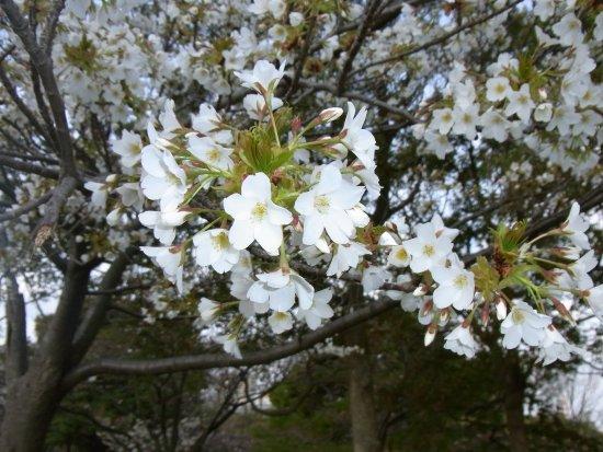 Ojima Komatsugawa Park Photo