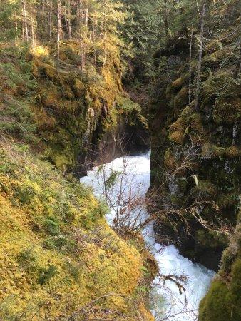 Little Qualicum Falls Provincial Park: photo5.jpg