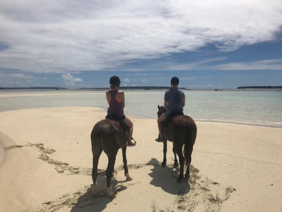 Luganville, Vanuatu: Had an amazing morning with Megan! Couldn't recommend Santo Horse Adventures enough if I tried!