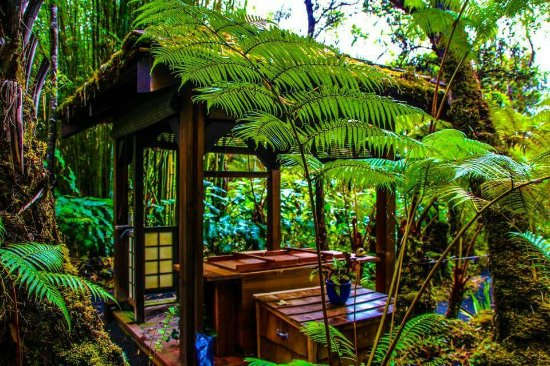 Volcano Rainforest Retreat: FB_IMG_1491109489900_large.jpg