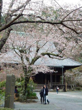 Myohonji Temple: photo4.jpg