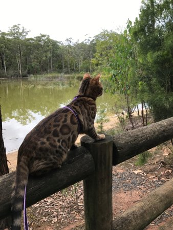 Moe, Australia: Most interesting