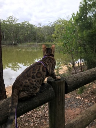 Moe, Australië: I can safely see the evil ducks from here
