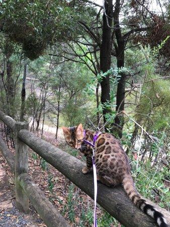 Moe, Australia: Come on human... we need to walk more