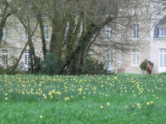 Chateau d'Eporce: Tapis de jonquilles dans le parc Château