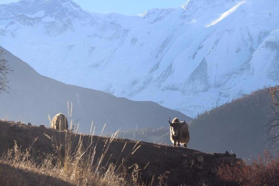 Iconic Nepal Tours & Treks