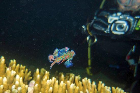 Sampaguita Resort: Mandarin fish