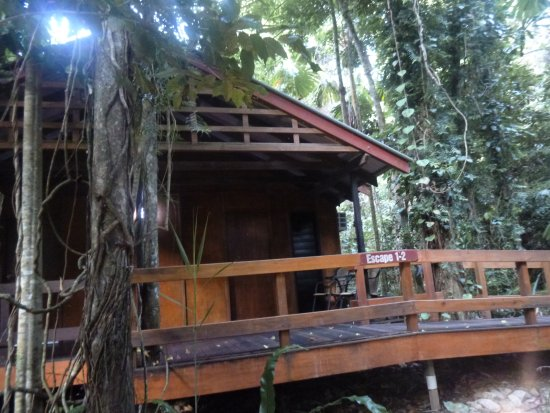 Cairns Region, Austrália: Our jungle lodge