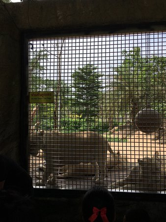Khao Kheow Open Zoo: photo3.jpg