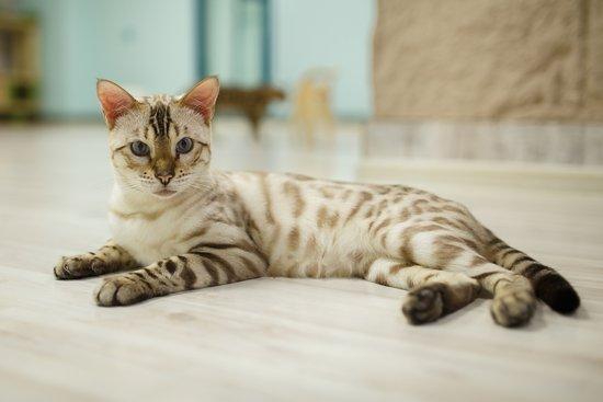 Клуб кошка москва бойцовский клубов москвы