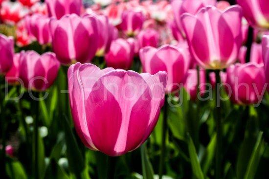 Olanda Meridionale, Paesi Bassi: Holanda