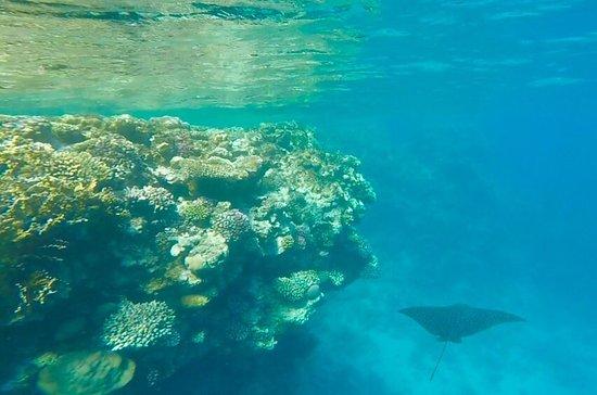 Hotel Jaz Fanara Resort Residence Sharm El Sheikh 4 Egypt
