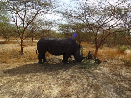 La Petite Cote, Senegal: Imposant le rhino