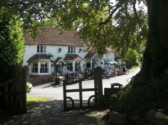 The George at Burpham: pub thro trees_large.jpg