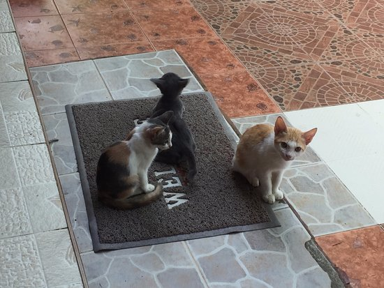 Trang Province, Thailand: Lovely kittens entertained us.