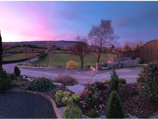 Abocurragh Farm Bed and Breakfast: Max enjoys the view on an early summers evening