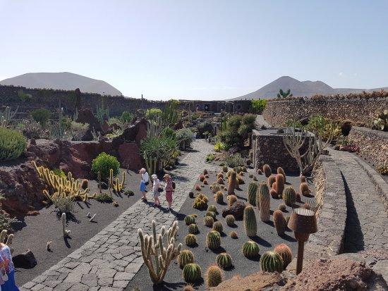 Jardin de cactus 8 picture of jardin de cactus guatiza for Jardineras de cactus