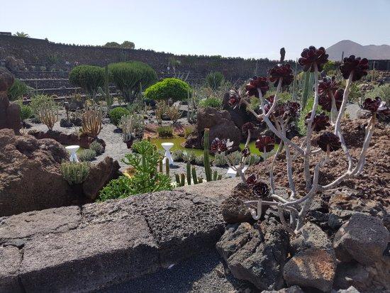 Jardin de cactus 11 picture of jardin de cactus guatiza - Jardin de cactus ...