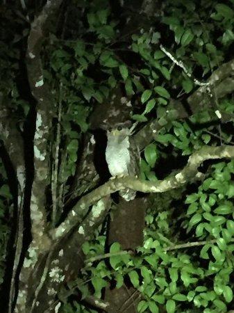Permai Rainforest Resort: photo8.jpg