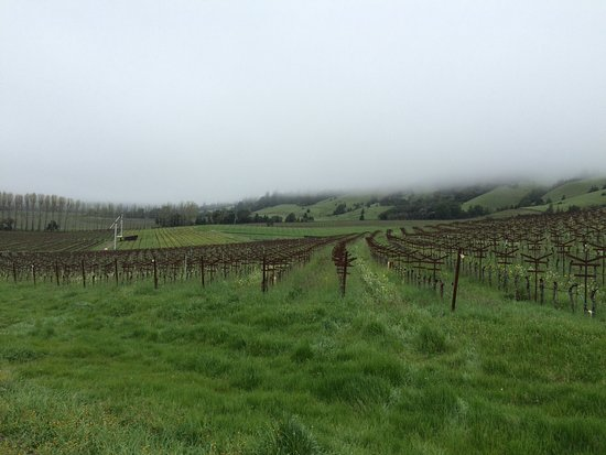 Philo, CA: Vineyards starting to bud out for the season