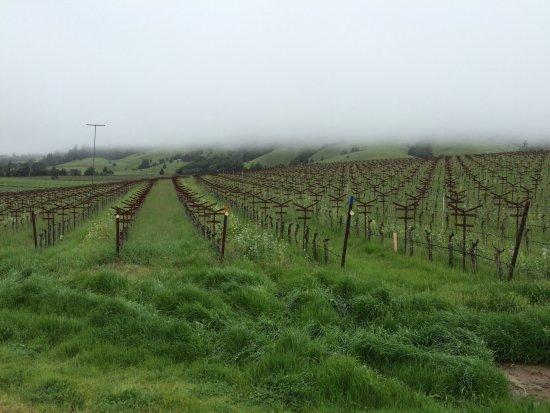 Philo, Californië: The fog just starting to lift