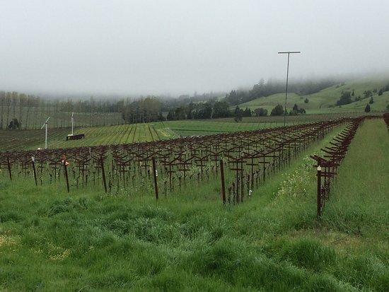 Philo, Californië: Surrounded by vineyards