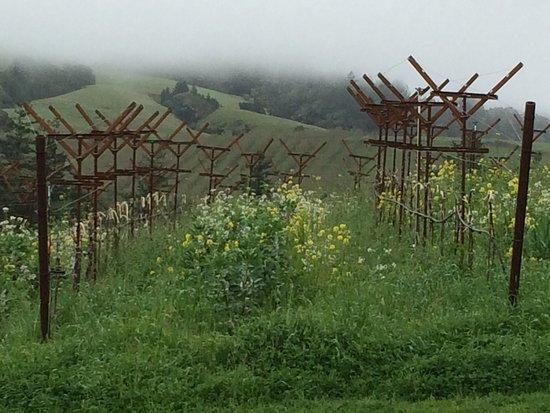 Philo, Californië: Beautifying morning in the Navarro Vineyard