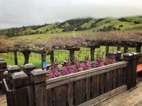 Navarro Vineyards: Large deck off the tasting room affords dramatic views of the property