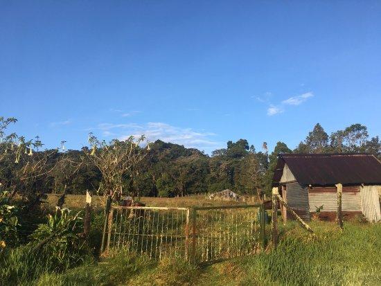 Sendero Los Quetzales (The Quetzales Trail) 사진