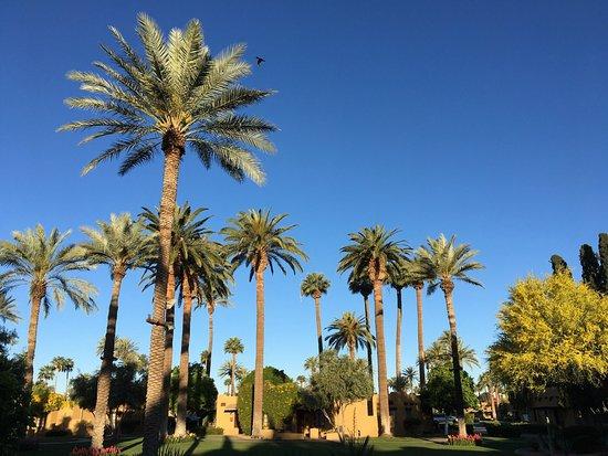 Litchfield Park, AZ: photo5.jpg