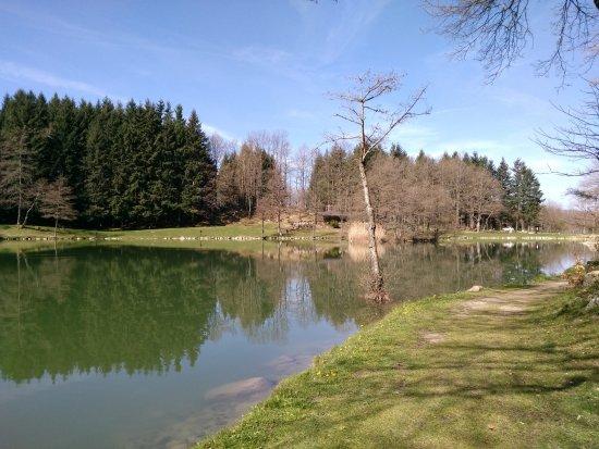 Panorma del lago foto di lago pontini bagno di romagna tripadvisor - Ristorante del lago bagno di romagna ...