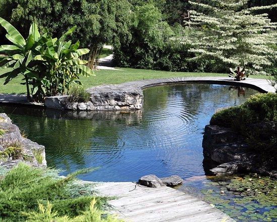 Jardins aquatiques d'Acorus
