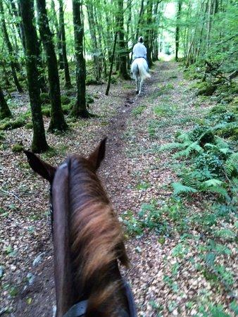 Quin, Ireland: We enjoyed a nice little trek through the woods.