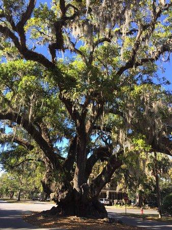 Lover's Oak: photo0.jpg