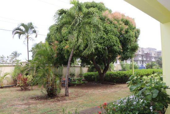 Bay Gardens Hotel: Garden view, Mango tree