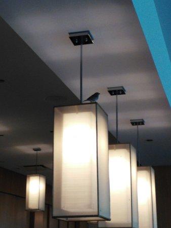 Hilton Orlando: Bird flew through the hotel
