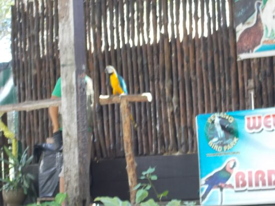 """Perai, Malaysia: The """"bird show"""" at about 3 30 pm (a bird on a show stand)"""